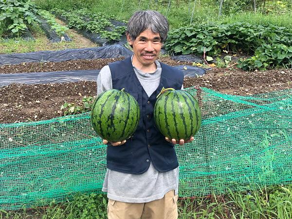 無農薬野菜を栽培